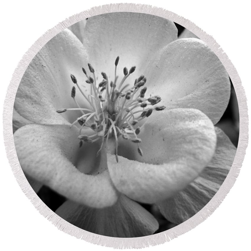 Flowers Round Beach Towel featuring the photograph Columbine by Amanda Barcon