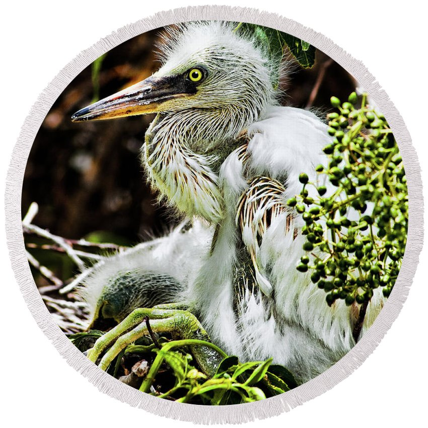 Egret Round Beach Towel featuring the photograph Come On Feathers by Christopher Holmes