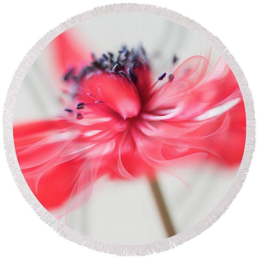 Flower Round Beach Towel featuring the photograph Comes With A Bow. by Usha Peddamatham