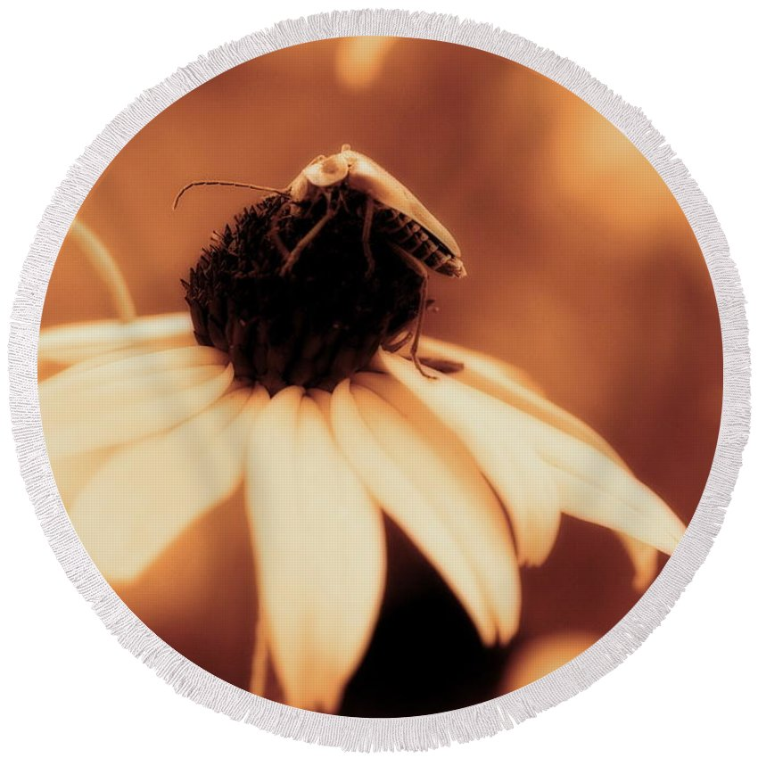 Black Eyed Susan Round Beach Towel featuring the photograph Comfortably Perched - Gold Glow by Angela Rath