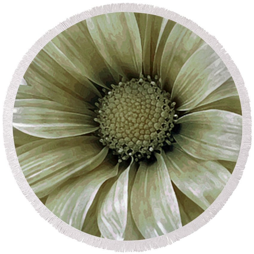 Flower Round Beach Towel featuring the photograph Coming Up Daisies 2 by Angelina Tamez