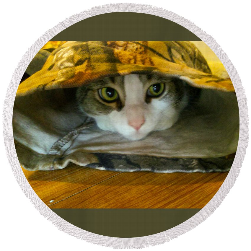 Camo Round Beach Towel featuring the photograph Commando Kitty by Jennifer Kohler