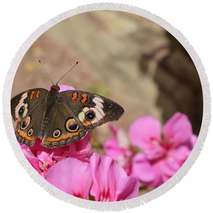 Butterfly Round Beach Towel featuring the photograph Common Buckeye Butterfly by Aimee L Maher ALM GALLERY