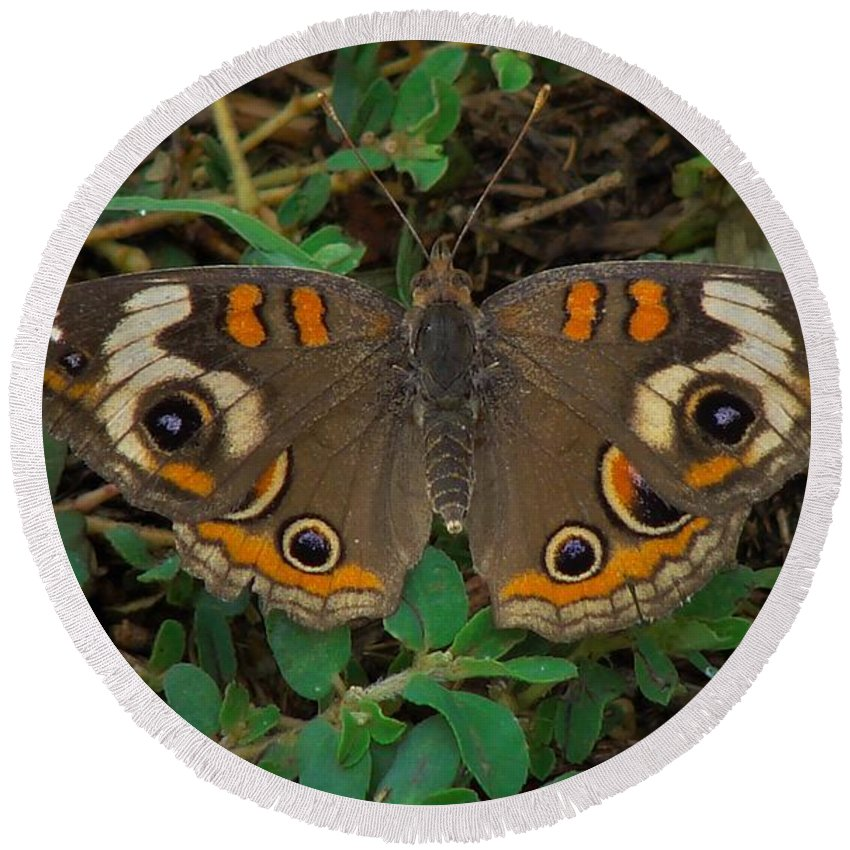 Round Beach Towel featuring the photograph Common Buckeye by Carl Moore