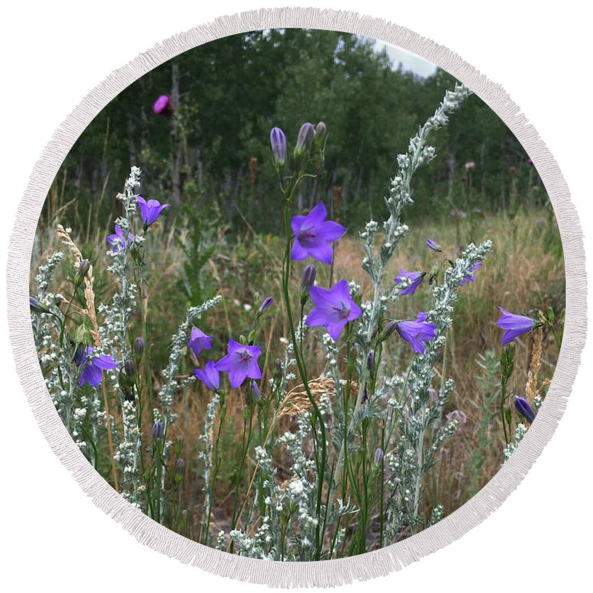 Wildflowers Round Beach Towel featuring the photograph Common Harebell by Carol Milisen