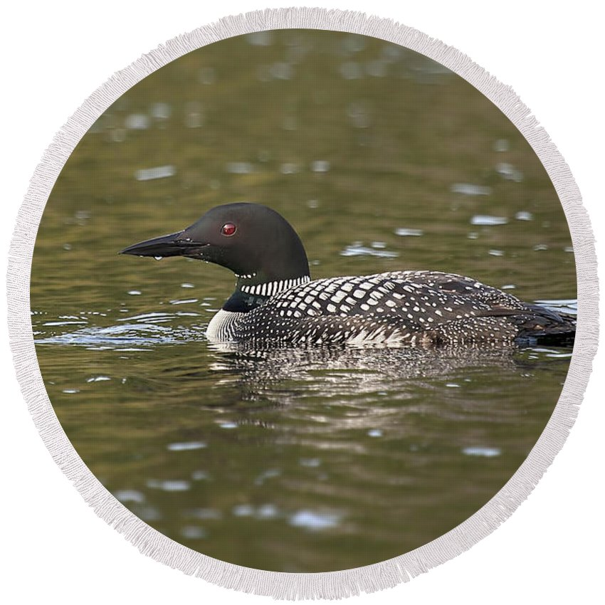 Loon Round Beach Towel featuring the photograph Common Loon by Eunice Gibb