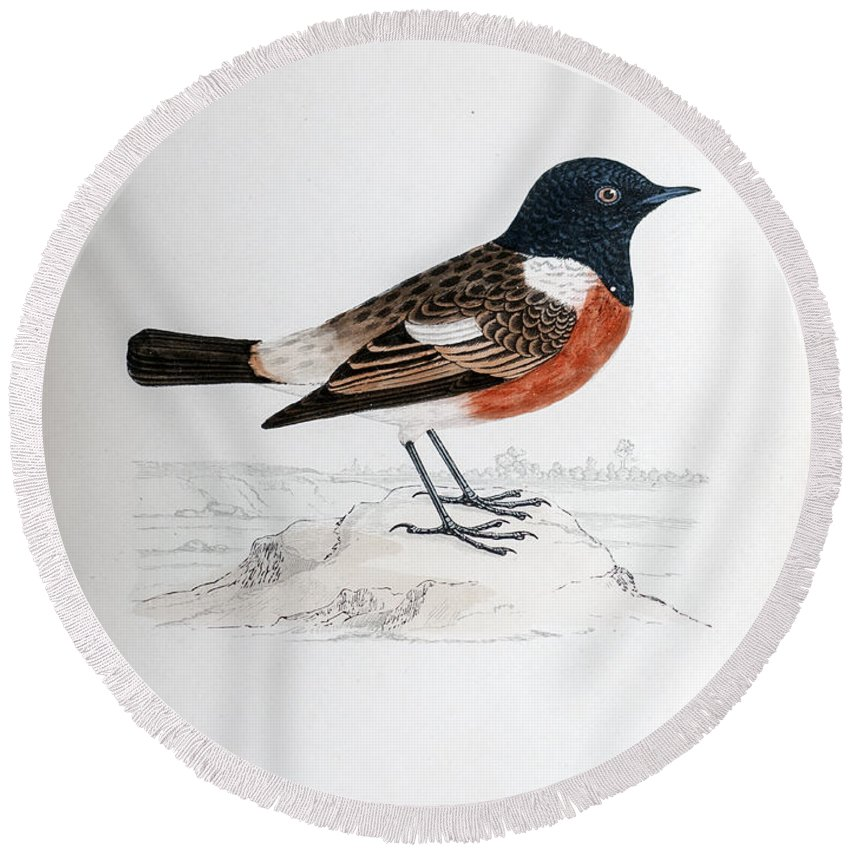 19th Round Beach Towel featuring the photograph Common Stonechat Illustration by Ilan Rosen