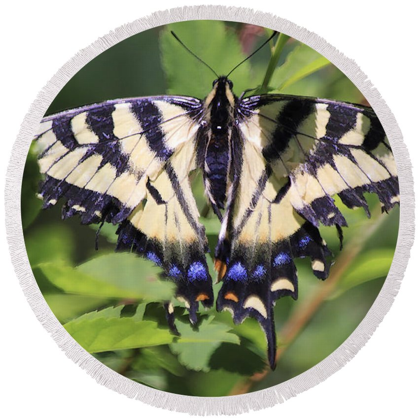Butterfly Round Beach Towel featuring the photograph Common Yellow Swallowtail by Deborah Benoit