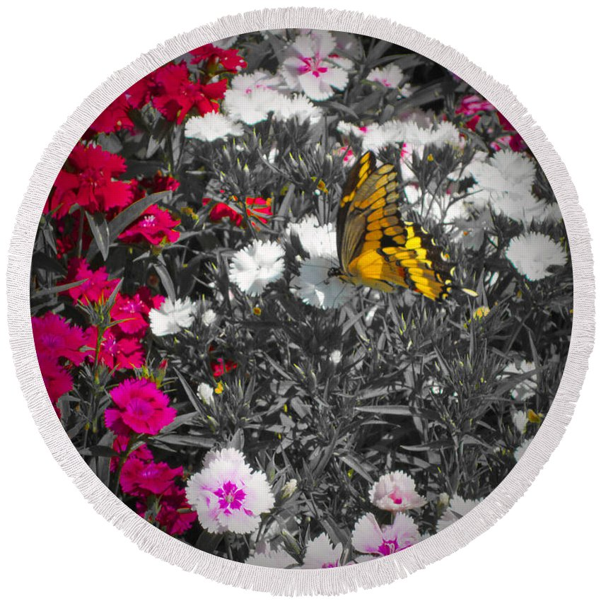 Butterfly Round Beach Towel featuring the photograph Competing Colors by Douglas Barnard