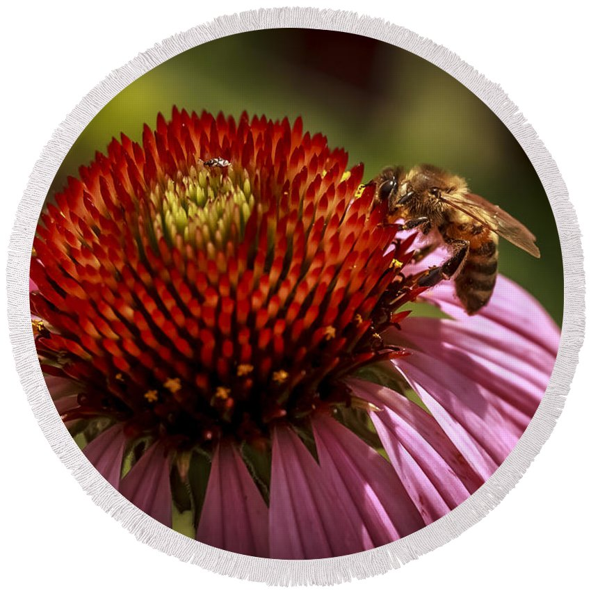 Flower Round Beach Towel featuring the photograph Coneflower Bee by John Lee
