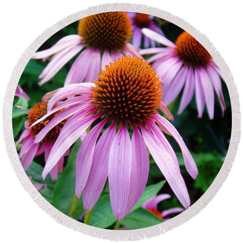 Coneflowers Round Beach Towel featuring the photograph Three Coneflowers by Nancy Mueller