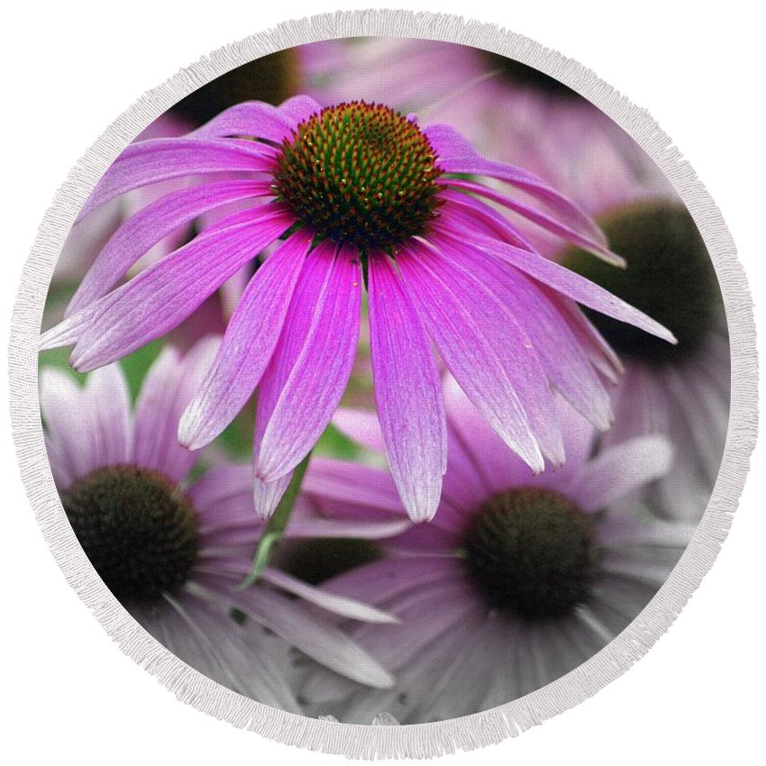 Flowers Round Beach Towel featuring the photograph Coneflowers by Marty Koch