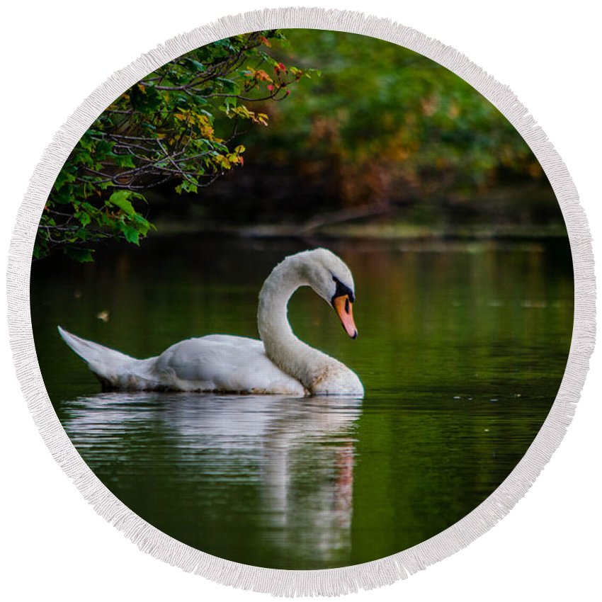 Swan Round Beach Towel featuring the photograph Contemplating Swan by Linda Howes