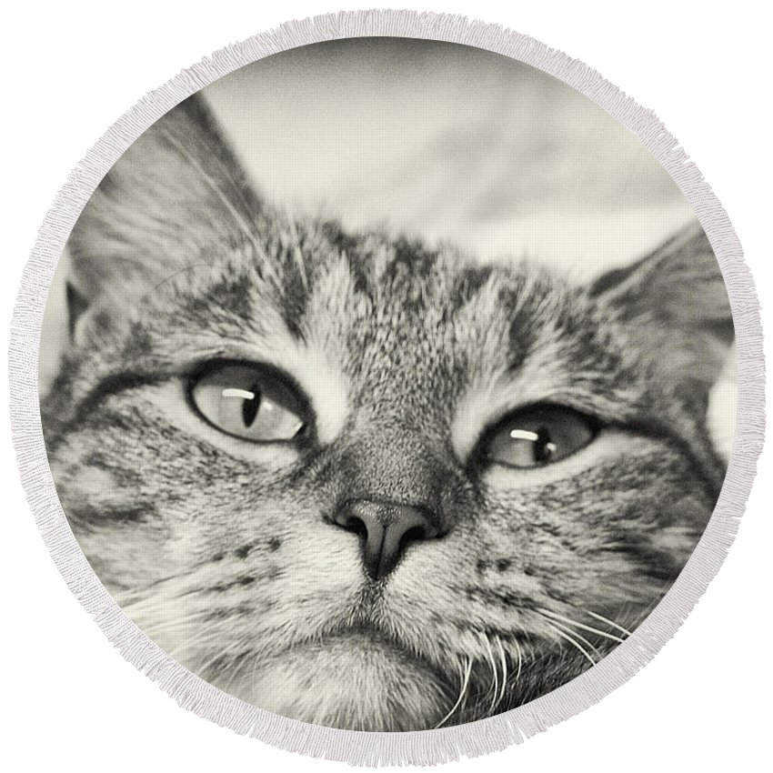 Cat Round Beach Towel featuring the photograph Content by Scott Wyatt