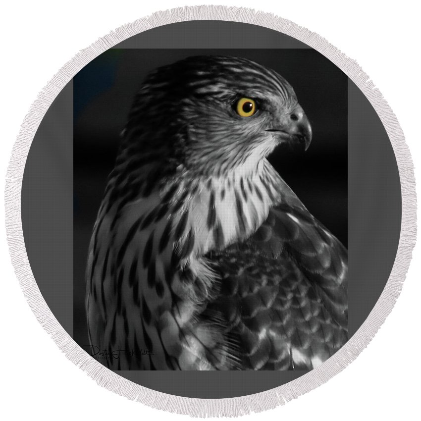 Coopers Round Beach Towel featuring the photograph Coopers Hawk Bw by Dustin Huckfeldt