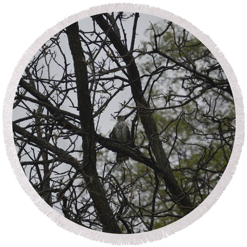 Hawk Round Beach Towel featuring the photograph Cooper's Hawk Perched In Tree by Deborah Weinhart