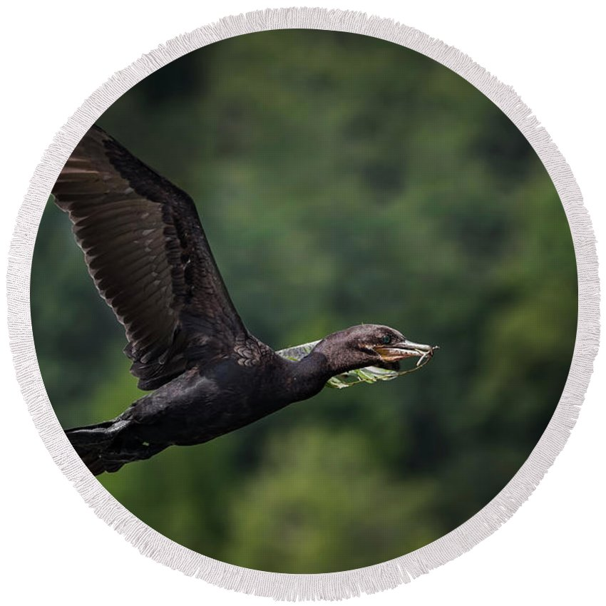Cormorant Round Beach Towel featuring the photograph Cormorant 7 by Kristopher Bedgood