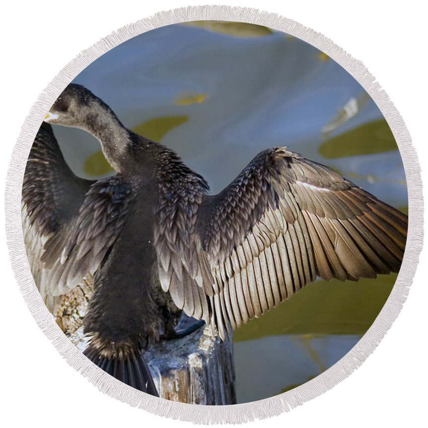 Neotropic Cormorant Round Beach Towel featuring the photograph Cormorant looking back by Robert Brown