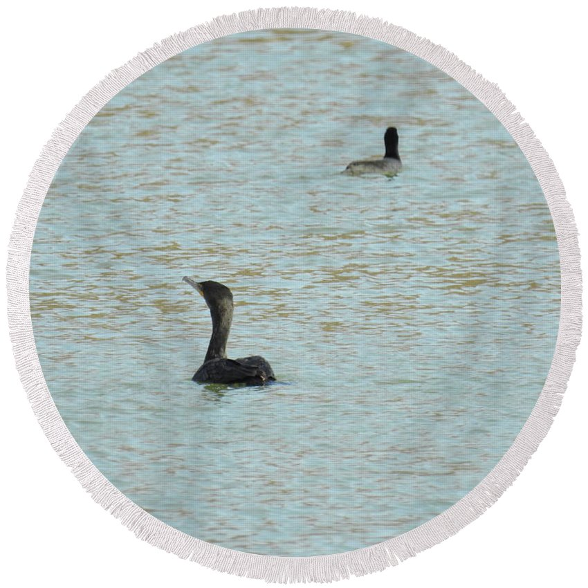 Cormorants On The Lake Round Beach Towel featuring the photograph Cormorants On The Lake by Ruth Housley