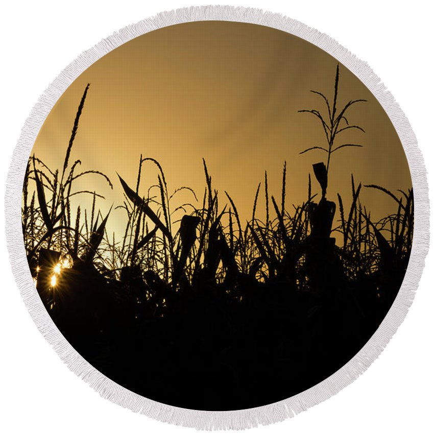 Corn Round Beach Towel featuring the photograph Corn Field Sunrise by Penny Meyers