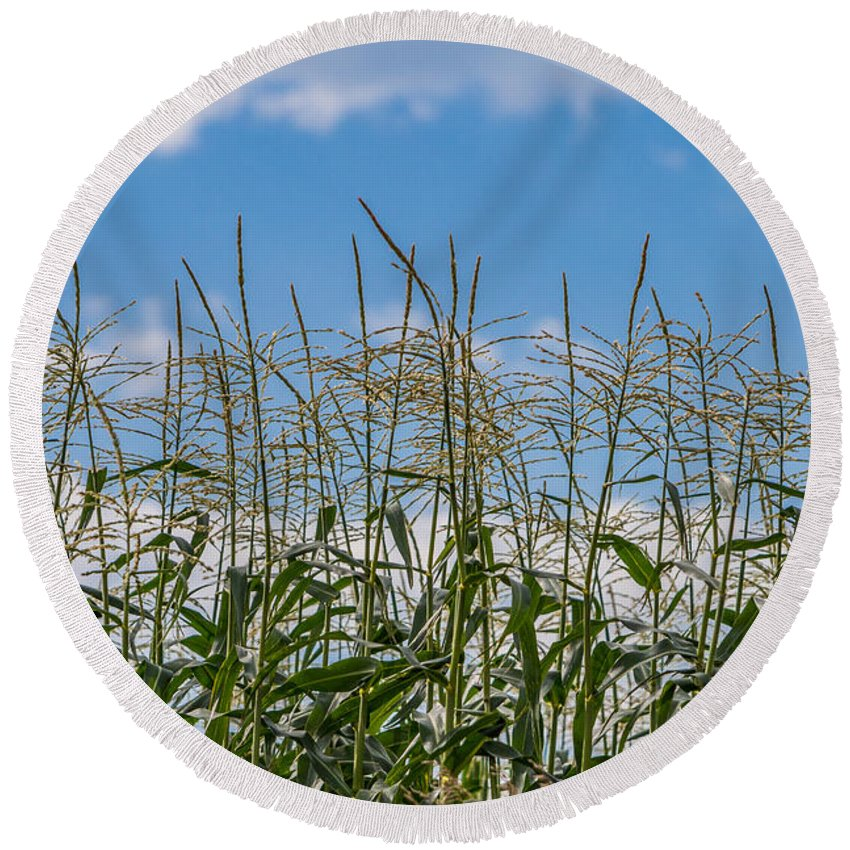 Corn Tassels Round Beach Towel featuring the photograph Corn Tassels In The Sky by Patti Deters