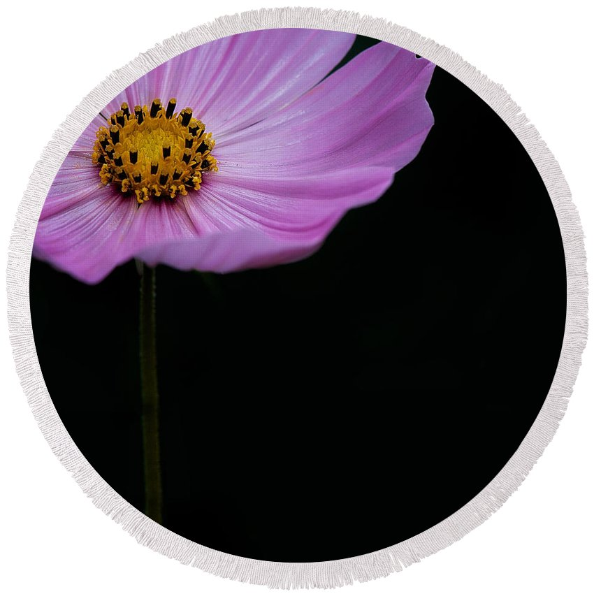 Lisa Knechtel Round Beach Towel featuring the photograph Cosmos On Black by Lisa Knechtel