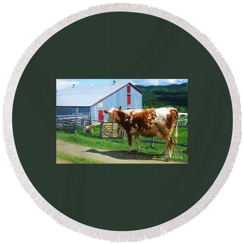 Photograph Cow Sheep Barn Field Newfoundland Round Beach Towel featuring the photograph Cow Sheep And Bicycle by Seon-Jeong Kim
