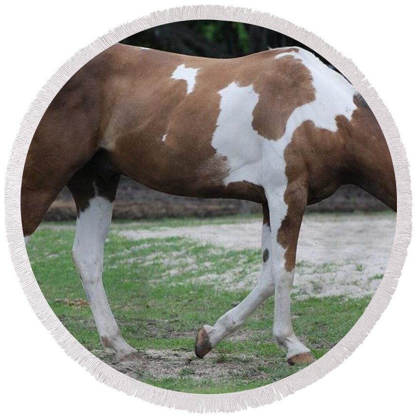 Horse Round Beach Towel featuring the photograph Cow Spotted Horse by Rob Hans