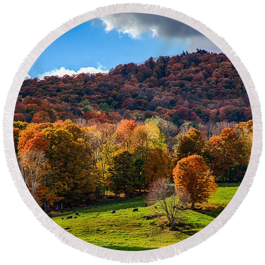 #jefffolger Round Beach Towel featuring the photograph Cows In Pomfret Vermont Fall Foliage by Jeff Folger