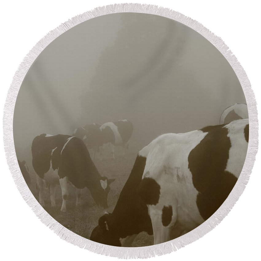 Animals Round Beach Towel featuring the photograph Cows In The Mist by Gaspar Avila
