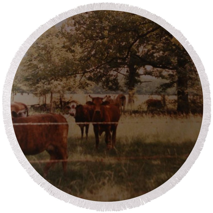 Cows Round Beach Towel featuring the photograph Cows by Rob Hans