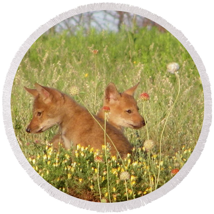 Pup Round Beach Towel featuring the photograph Coyote Pups by Gale Cochran-Smith