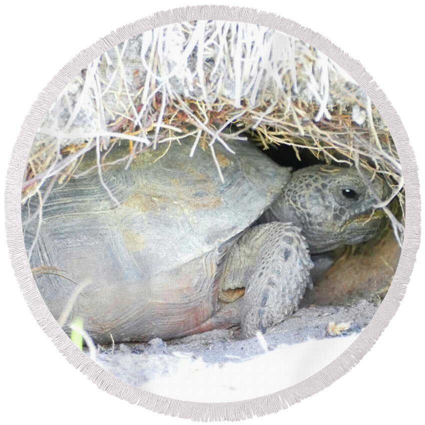 Gopher Tortoise Round Beach Towel featuring the photograph Cozy Burrow by Sally Sperry