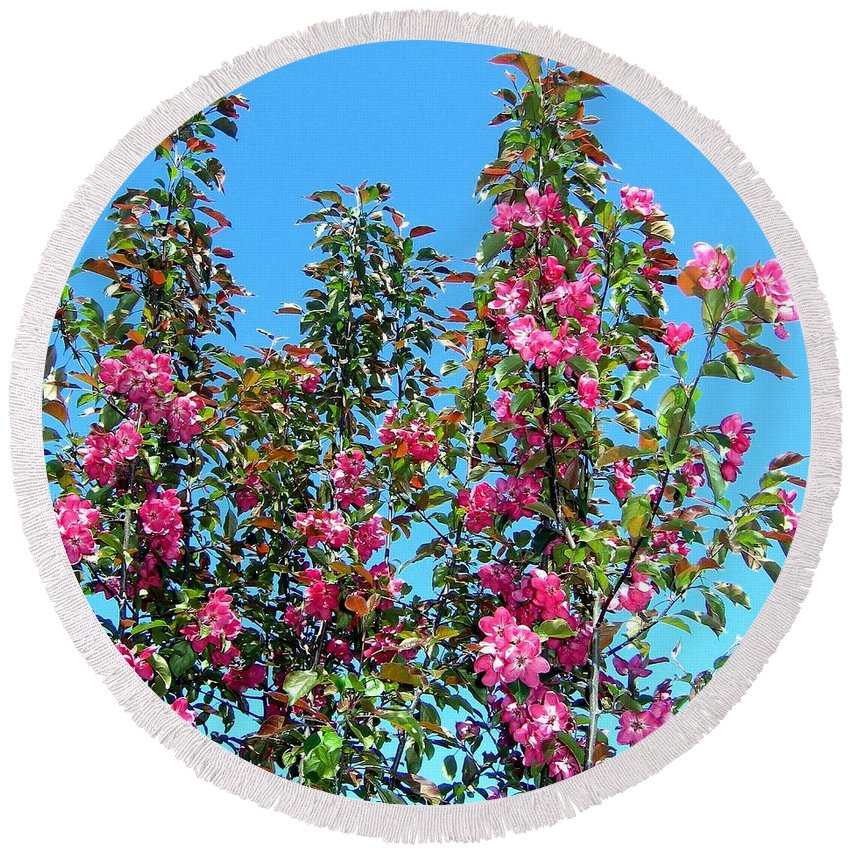 Crab Apple Blossoms Round Beach Towel featuring the photograph Crab Apple Blossoms by Will Borden