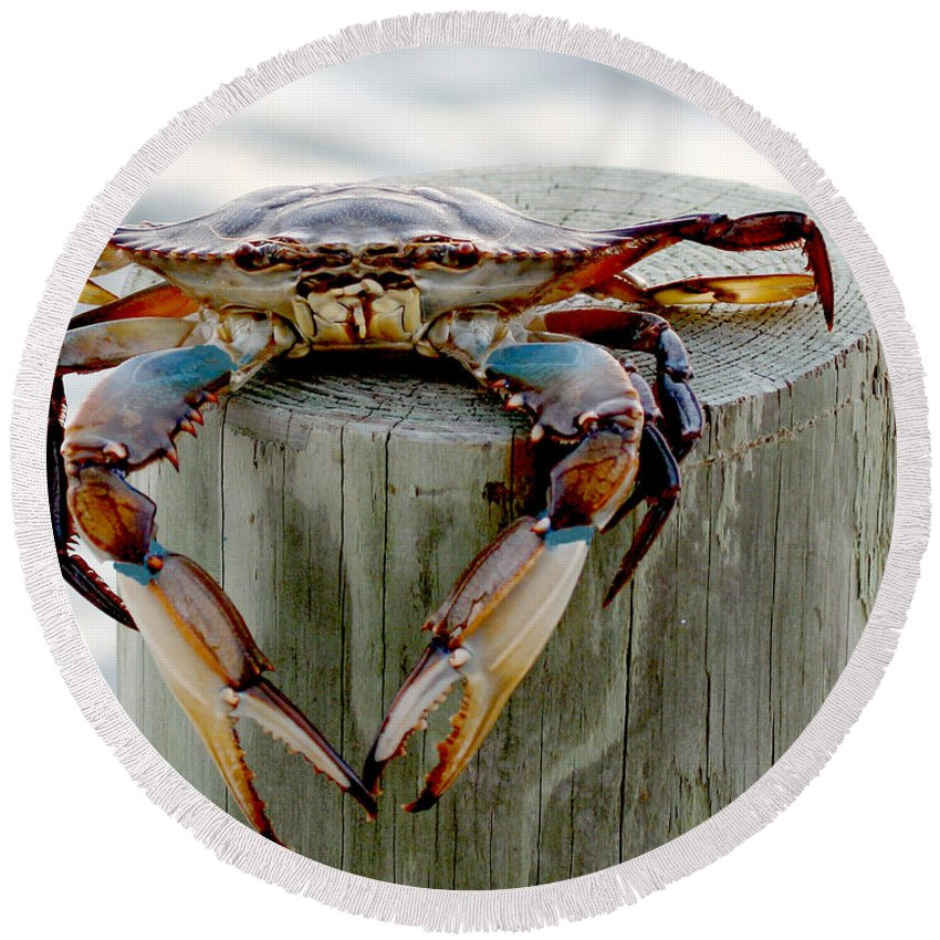 Crab Photography Round Beach Towel featuring the photograph Crab Hanging Out by Luana K Perez