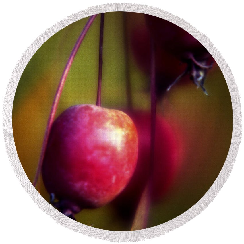 Macro Round Beach Towel featuring the photograph Crabapple by Lee Santa