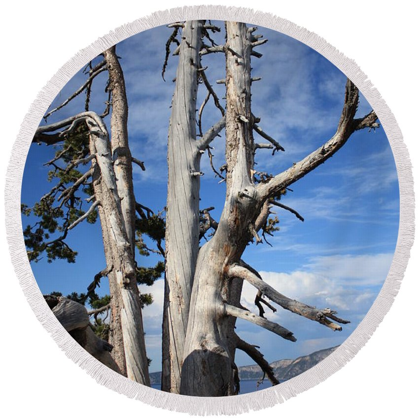 Tree Round Beach Towel featuring the photograph Crater Lake Tree by Carol Groenen