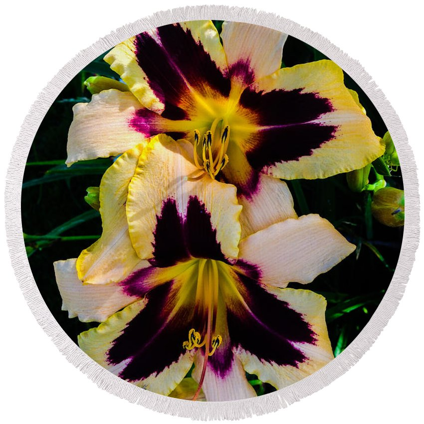 Cream Round Beach Towel featuring the photograph Cream And Purple Lilies by Jennifer Kohler