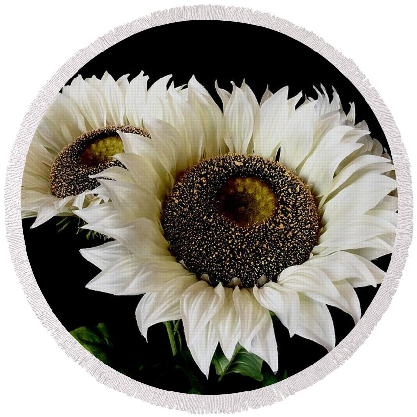 Sunflowers Round Beach Towel featuring the photograph Creamy Sunflowers by Jeannie Rhode