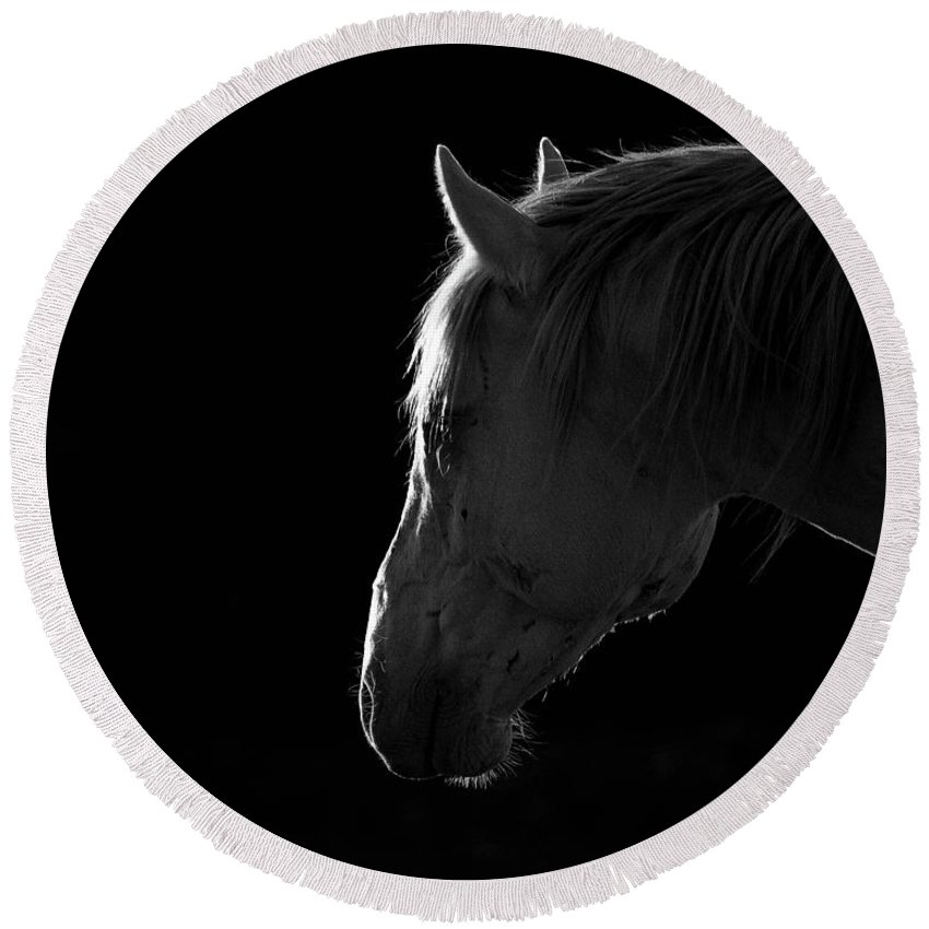Wild Horses Round Beach Towel featuring the photograph Cremello In Black by Dirk Johnson