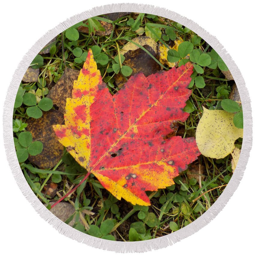 Maple Leaf Round Beach Towel featuring the photograph Crimson And Clover by William Tasker
