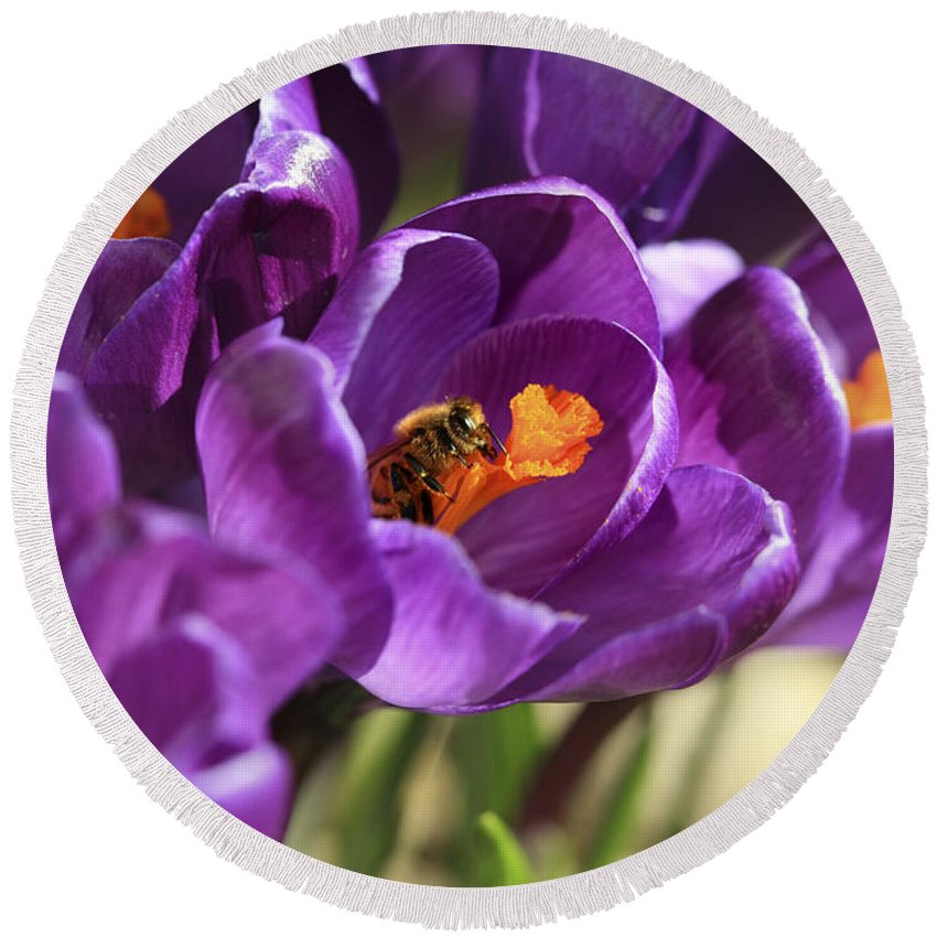 Bee Round Beach Towel featuring the photograph Crocus And Bee by Marilyn Hunt