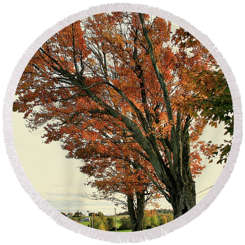 Tree Round Beach Towel featuring the photograph Crooked Tree by Deborah Benoit