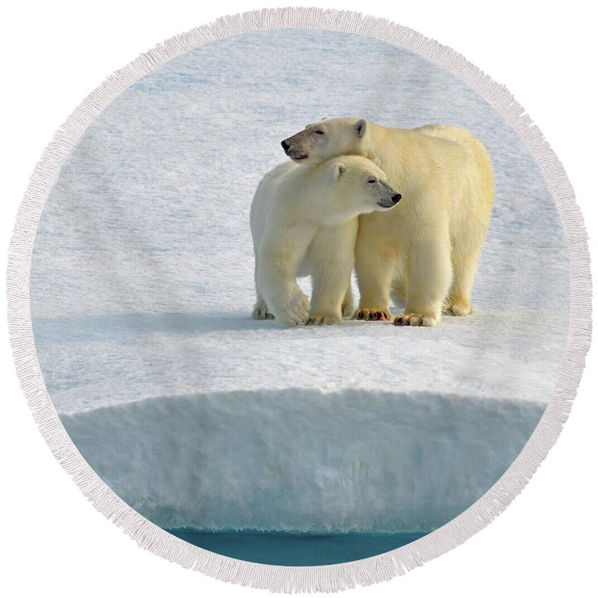Polar Bear Round Beach Towel featuring the photograph Crossing by Tony Beck