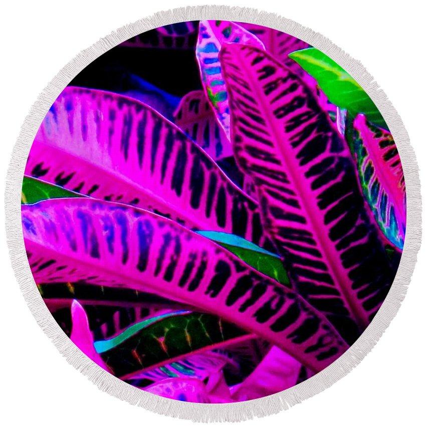 Croydon Plants Purple Green Round Beach Towel featuring the photograph Croton by Ian MacDonald