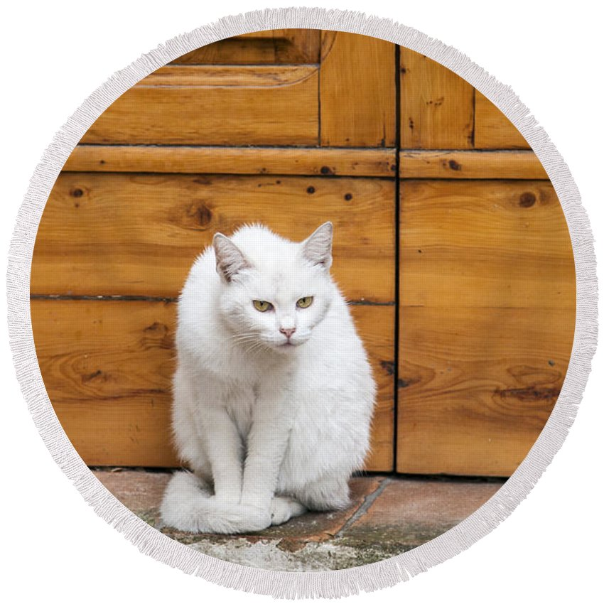 White Cat Sitting Up Round Beach Towel featuring the photograph Curious White Cat by Sally Weigand