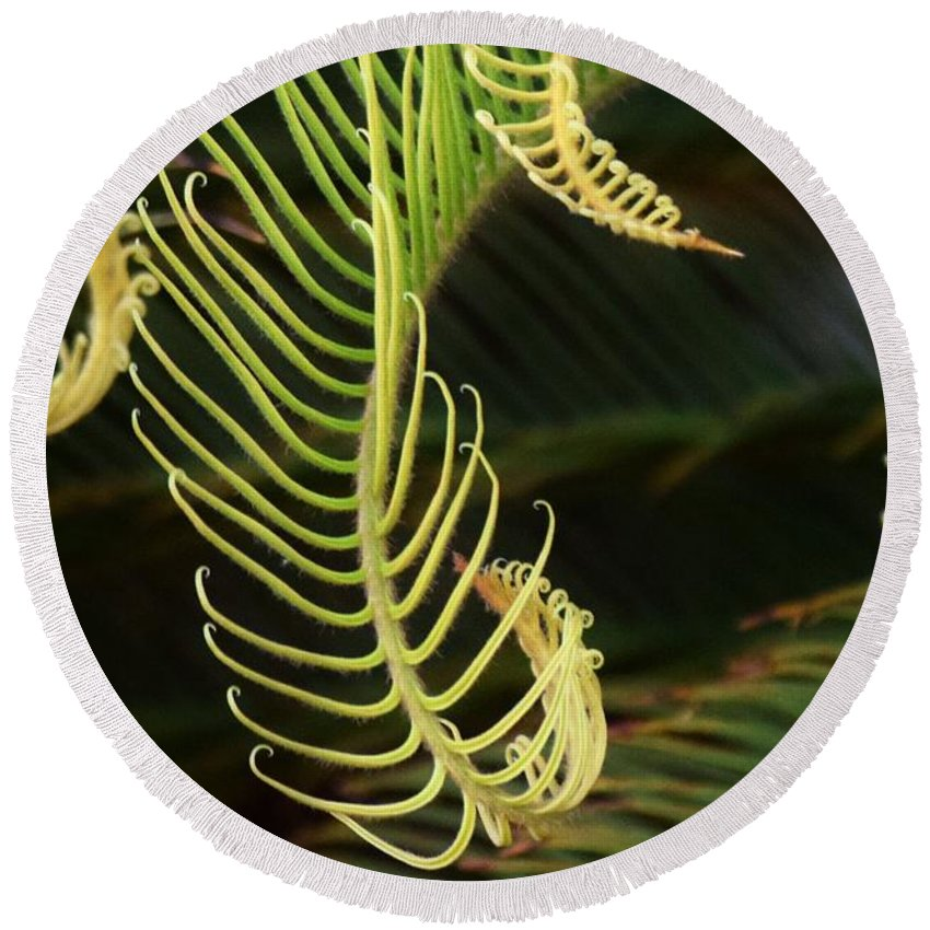 Plants Round Beach Towel featuring the photograph Curly Qs by John Glass