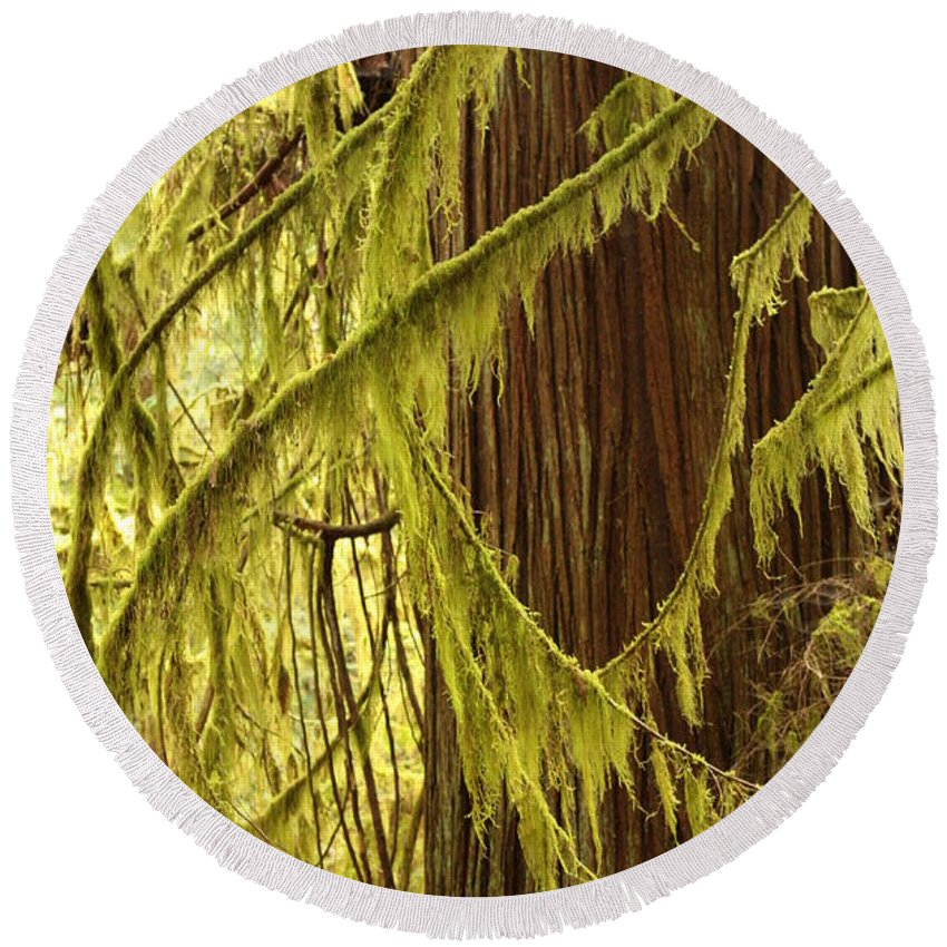Natural Patterns Round Beach Towel featuring the photograph Curves In The Rainforest by Carol Groenen
