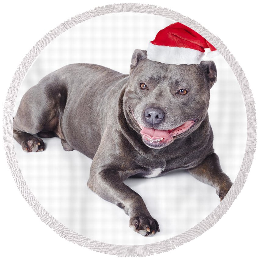 Adorable Round Beach Towel featuring the photograph Cute Dog In Santa Hat by Jorgo Photography - Wall Art Gallery