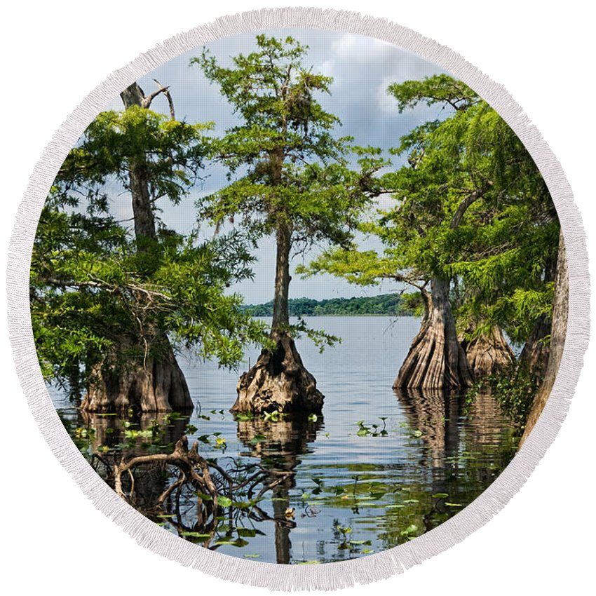 Trees Round Beach Towel featuring the photograph Cypress Reflections by Christopher Holmes